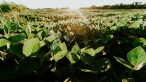 Read more about the article Why soy is healthy – 7 myths debunked
